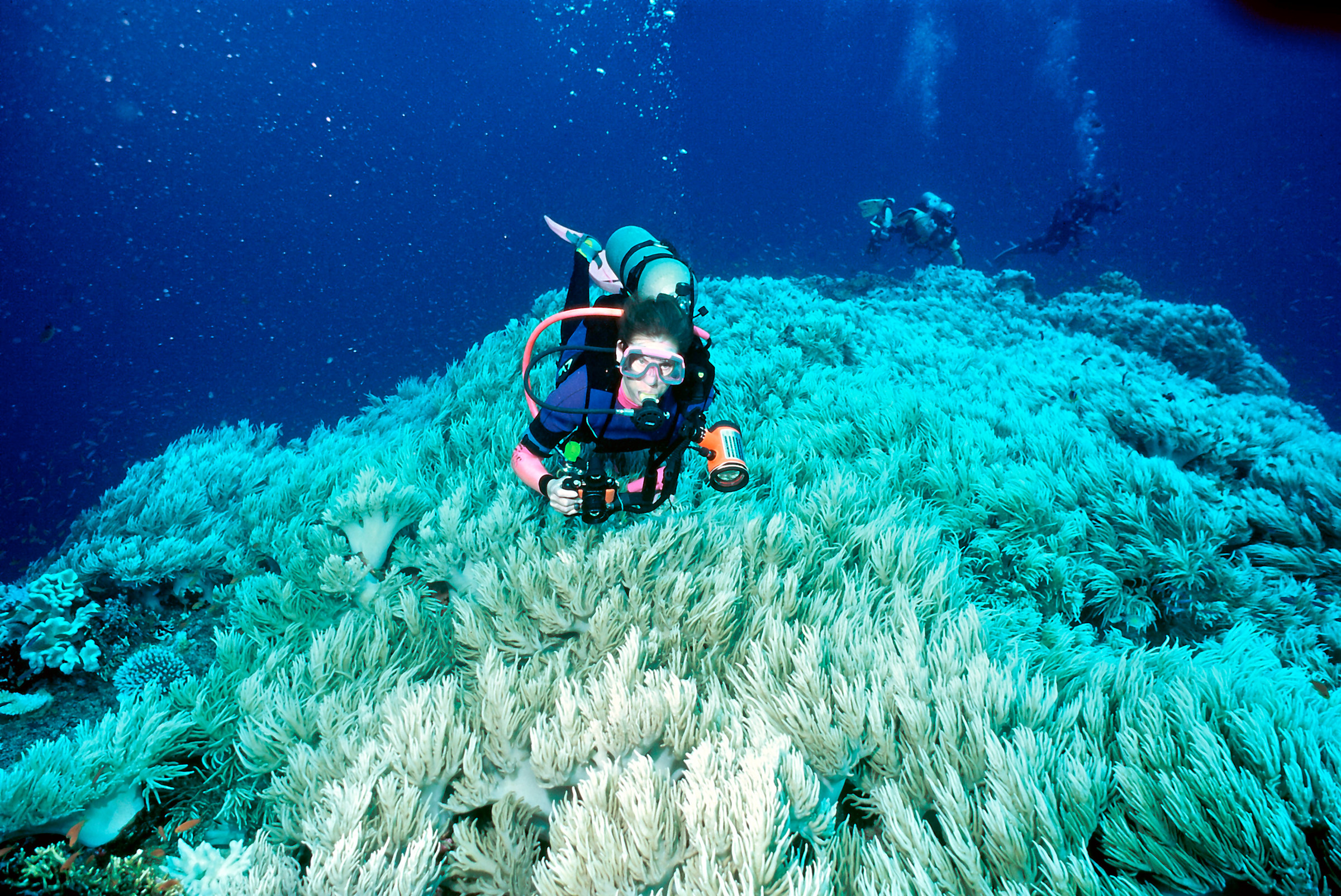 anthropogenic effects on coral reefs essay Coral reefs, with their millions of species, have changed profoundly because of the effects of people, and will continue to do so for the foreseeable future.